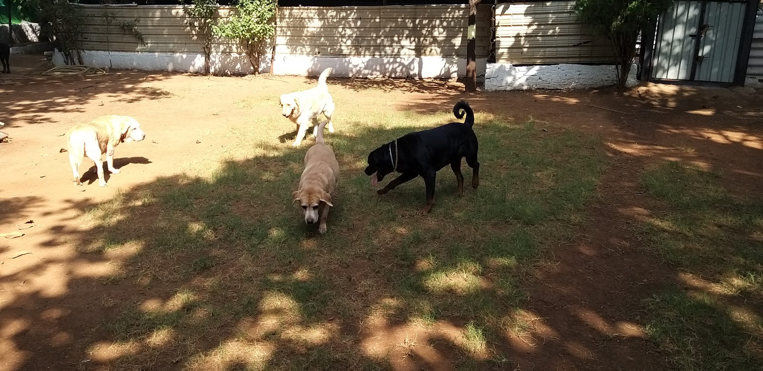 What is Dog Training